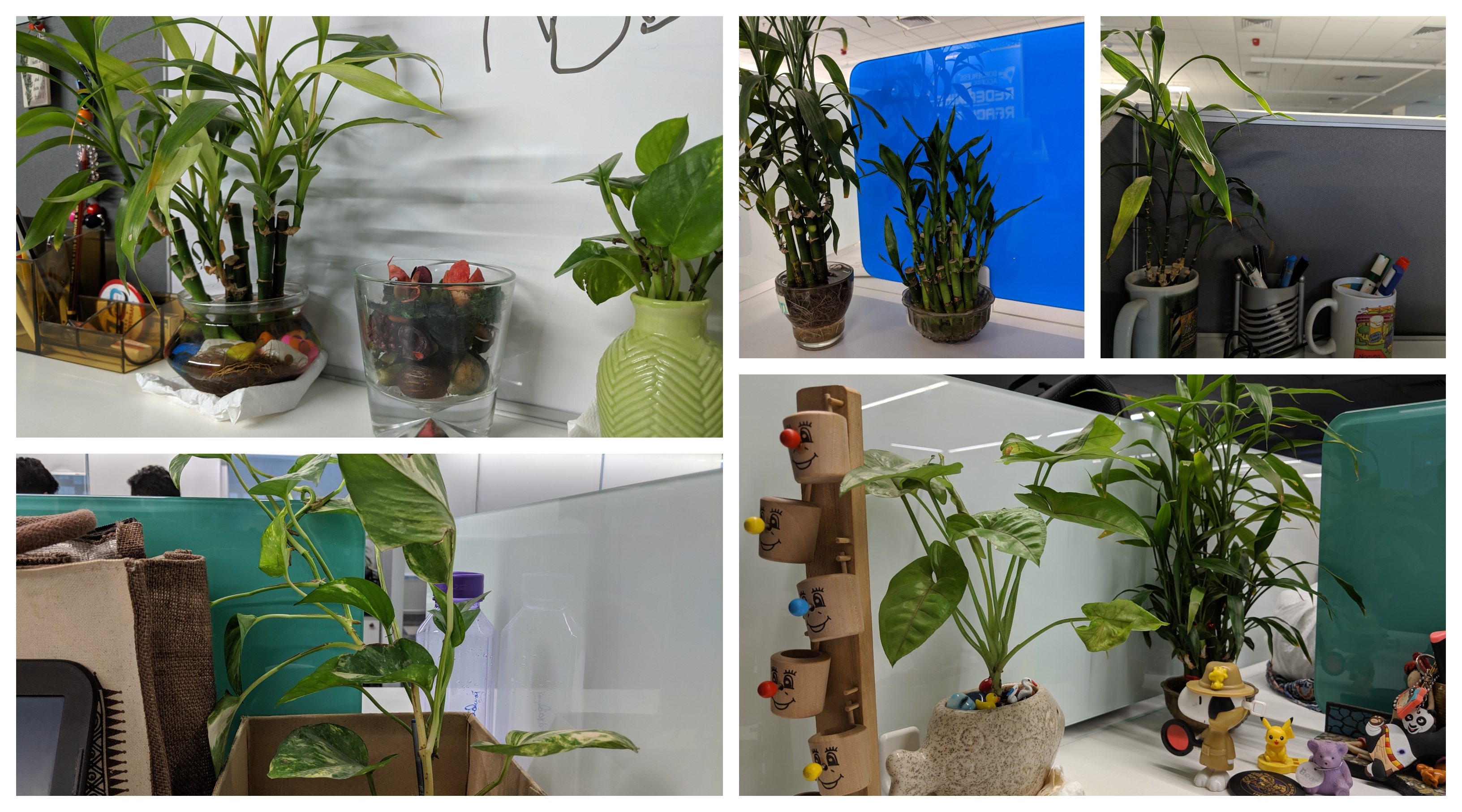 Workstation plants